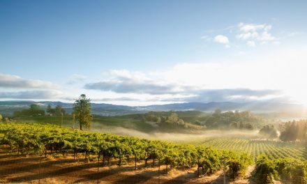 5 of the Most Beautiful Destinations for Wine-Lovers